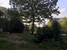 The Oak tree!!